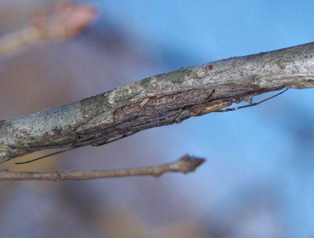 クモの越冬