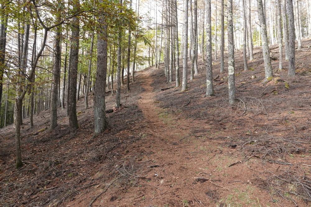 カラマツ林の小径201024.JPG