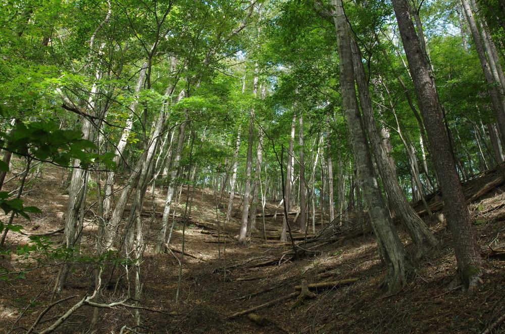 カラマツ混じりの林190928.JPG