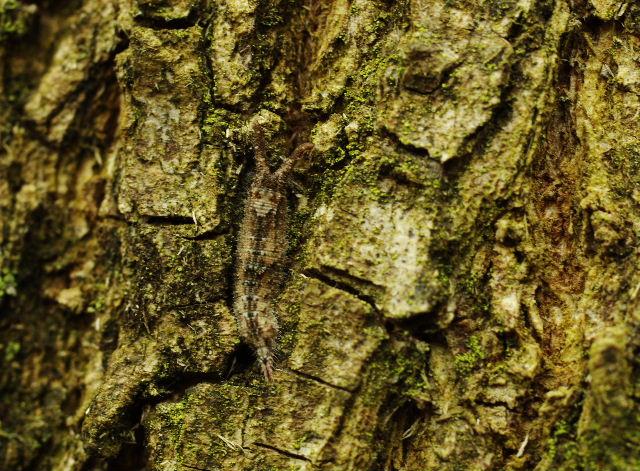 コムラサキ幼虫121215.JPG