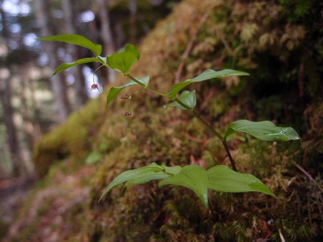 タケシマラン120602.JPG