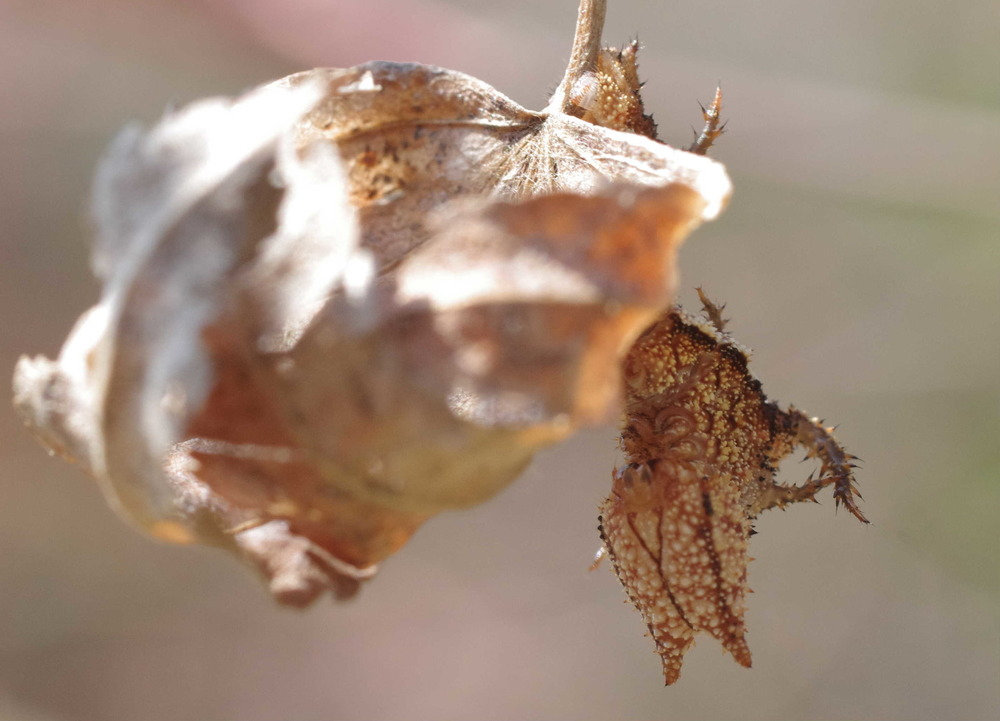 ミスジチョウ幼虫200404−1.JPG