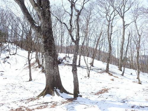 尾根の残雪170318.JPG