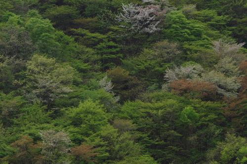 新緑170504.JPG