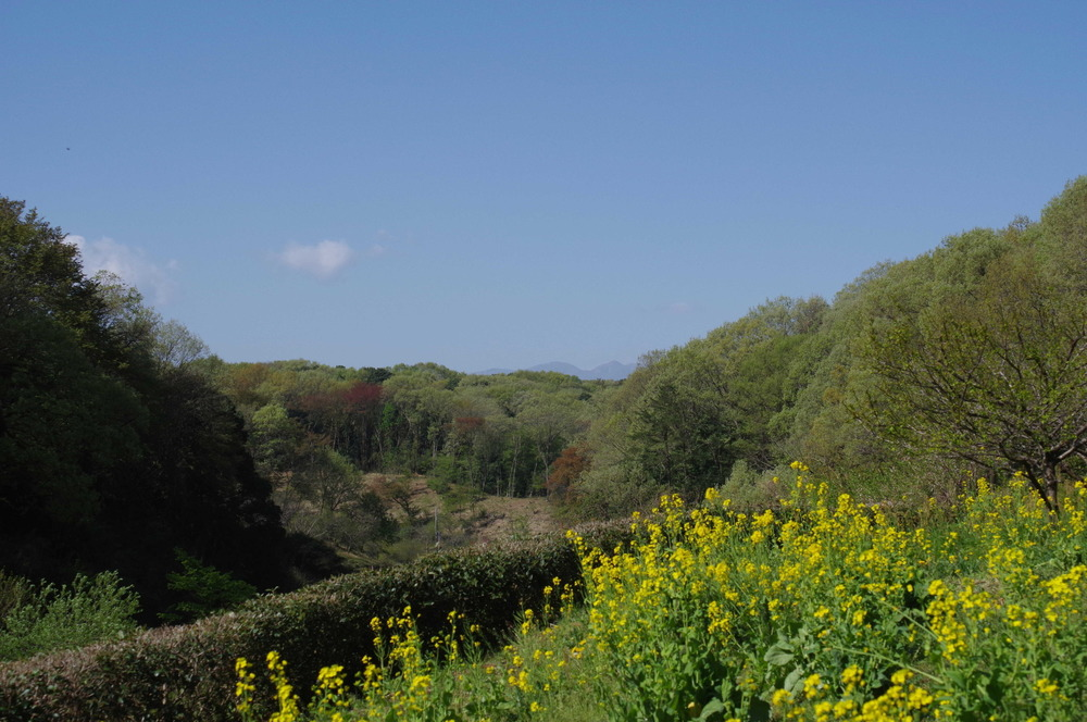 春の里山180408.JPG