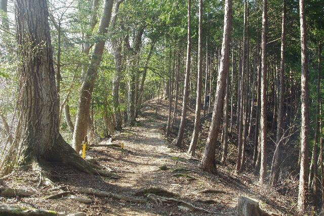 杉林の急斜面180328.JPG