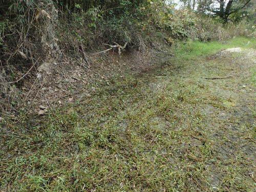 河原の湿地151023.JPG