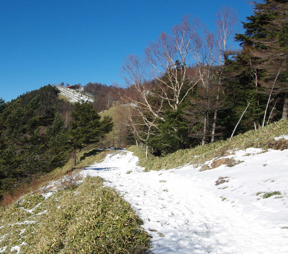 縦走路越しの雲取山181215.JPG