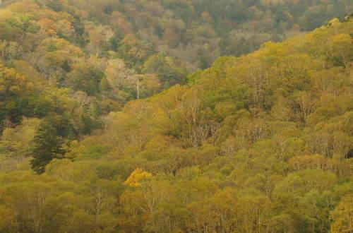 色づいた樹林.JPG