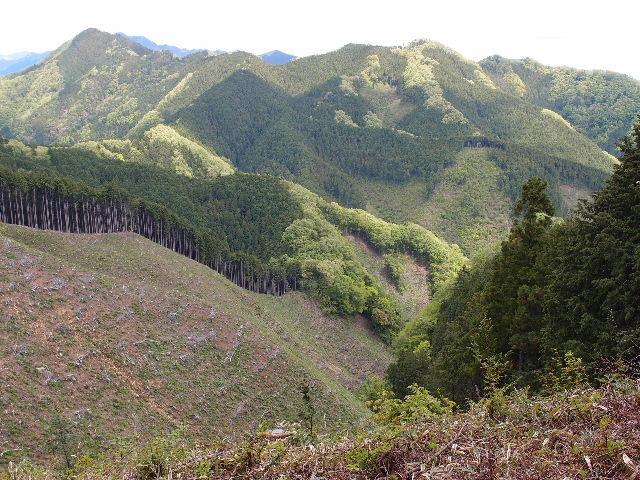 醍醐丸手前の伐採地120513.JPG