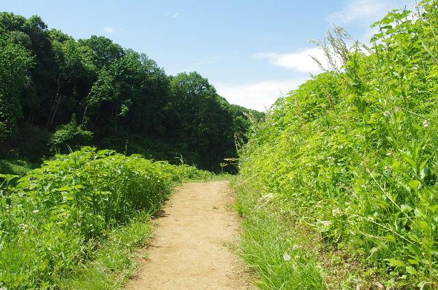 里山の小道180506.JPG