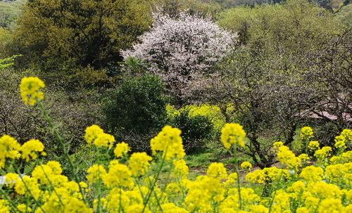 里山の風景150412.JPG