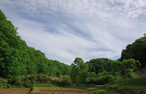 里山の風景150504.JPG