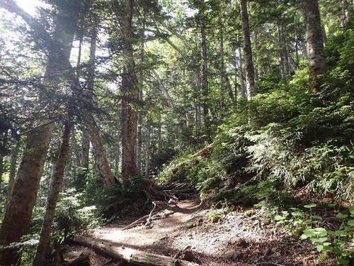 針葉樹林帯160723-1.JPG