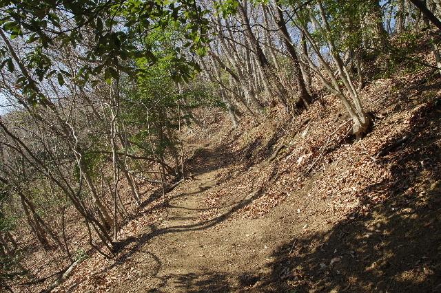 雑木林の登山道180328.JPG
