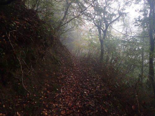 霧の登山道161029.JPG