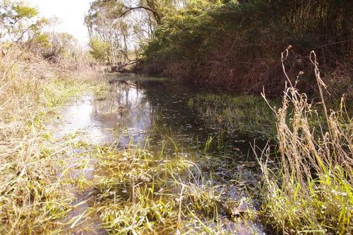 カトリヤンマの湿地171111.JPG